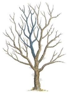 Sometimes bigger limbs have to go. Illustration by John Burgoyne