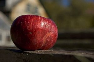 Red St. Lawrence heirloom apple. (photo: Frank Siteman)