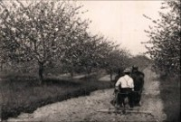 Handling orchard ground in 1914. Source: Productive Orcharding by Fred Sears.